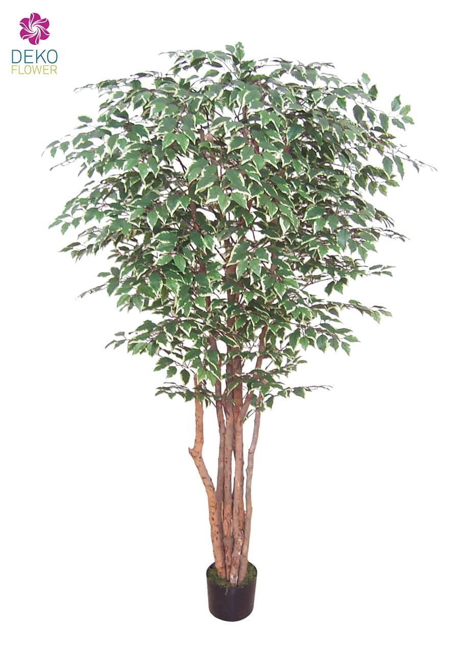 Künstlicher Ficus 190 cm »Pacific« grün weiß