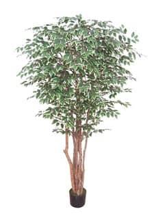 Künstlicher Ficus Baum Pacific grün weiß 190 cm