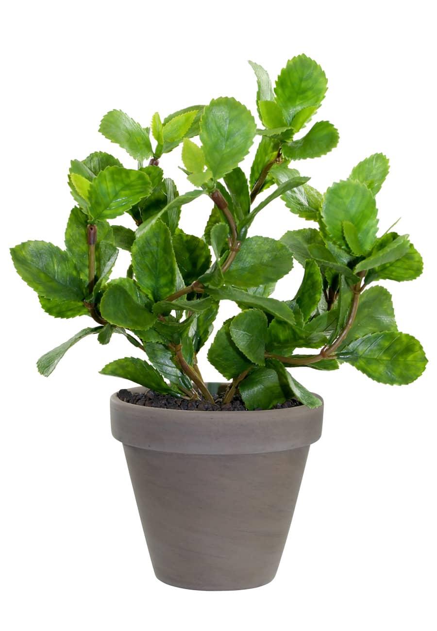 Künstliche Pflanze »Haselnuss« 28 cm im Tontopf