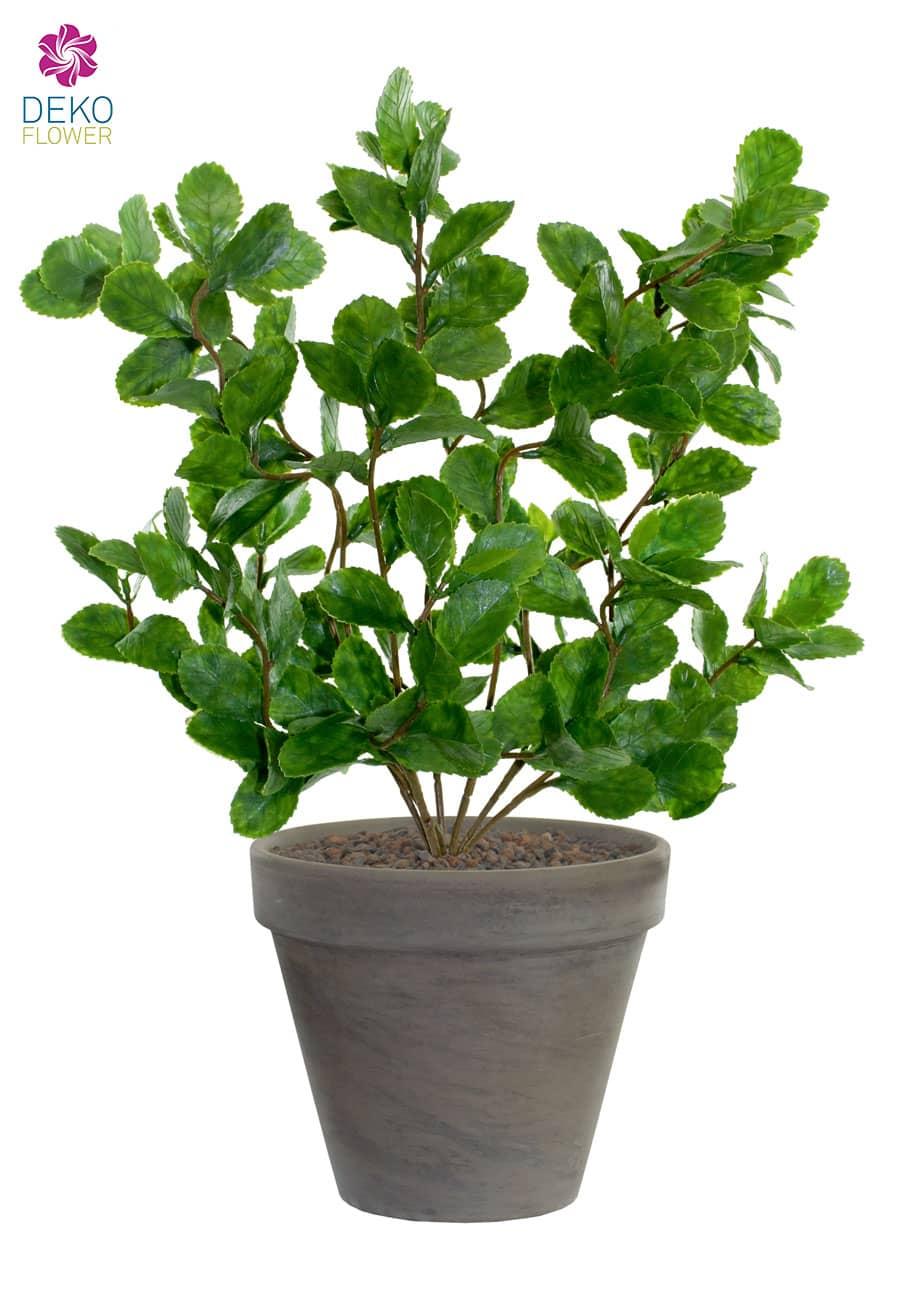 Künstliche Pflanze »Haselnuss« 44 cm im Tontopf