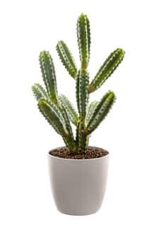 Künstlicher Kaktus 50 cm