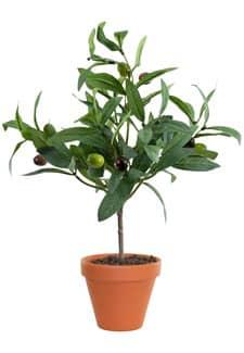 Kunstpflanzen Olivenbäumchen 27cm