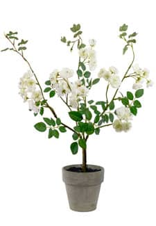 Künstlicher Rosenstrauch im Topf creme weiß 45 cm