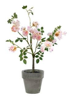 Künstlicher Rosenstrauch im Topf rosa 45 cm
