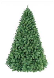 Weihnachtsbaum Monterey Pine 240 cm in grün