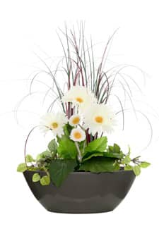 Blumenarrangement mit Gerberas 54 cm in ovaler Schale
