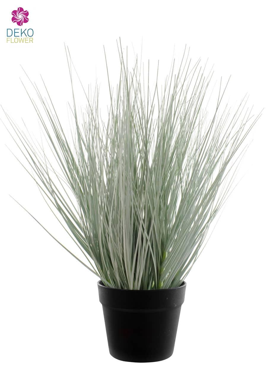 Dekopflanze Gras im Topf 54 cm
