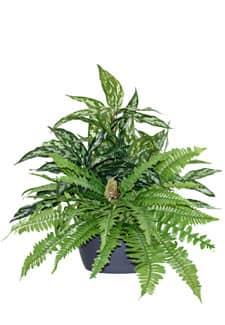 Künstliches Grünpflanzen Arrangement mit Farn 56 cm