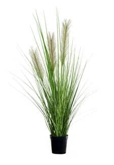 Künstliches Pampasgras grün 82 cm