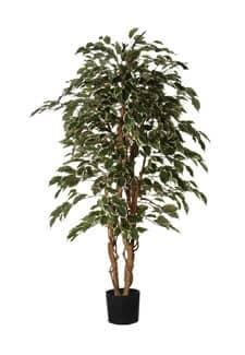 Kunstbaum Ficus Exotica grün weiß 150 cm