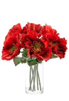 Kurzstielige Mohnblumen 28cm rot, 6 Stück