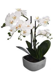 Kunstorchidee 60 cm weiß in Schale