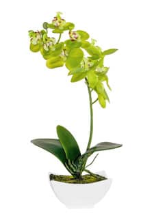 Kunstorchidee grün 24 cm in Keramikschale