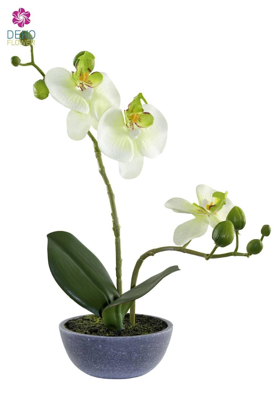 Kunstorchidee grün 25 cm in Schale