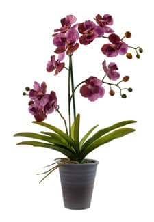 Kunstorchidee in Keramiktopf pink 57 cm