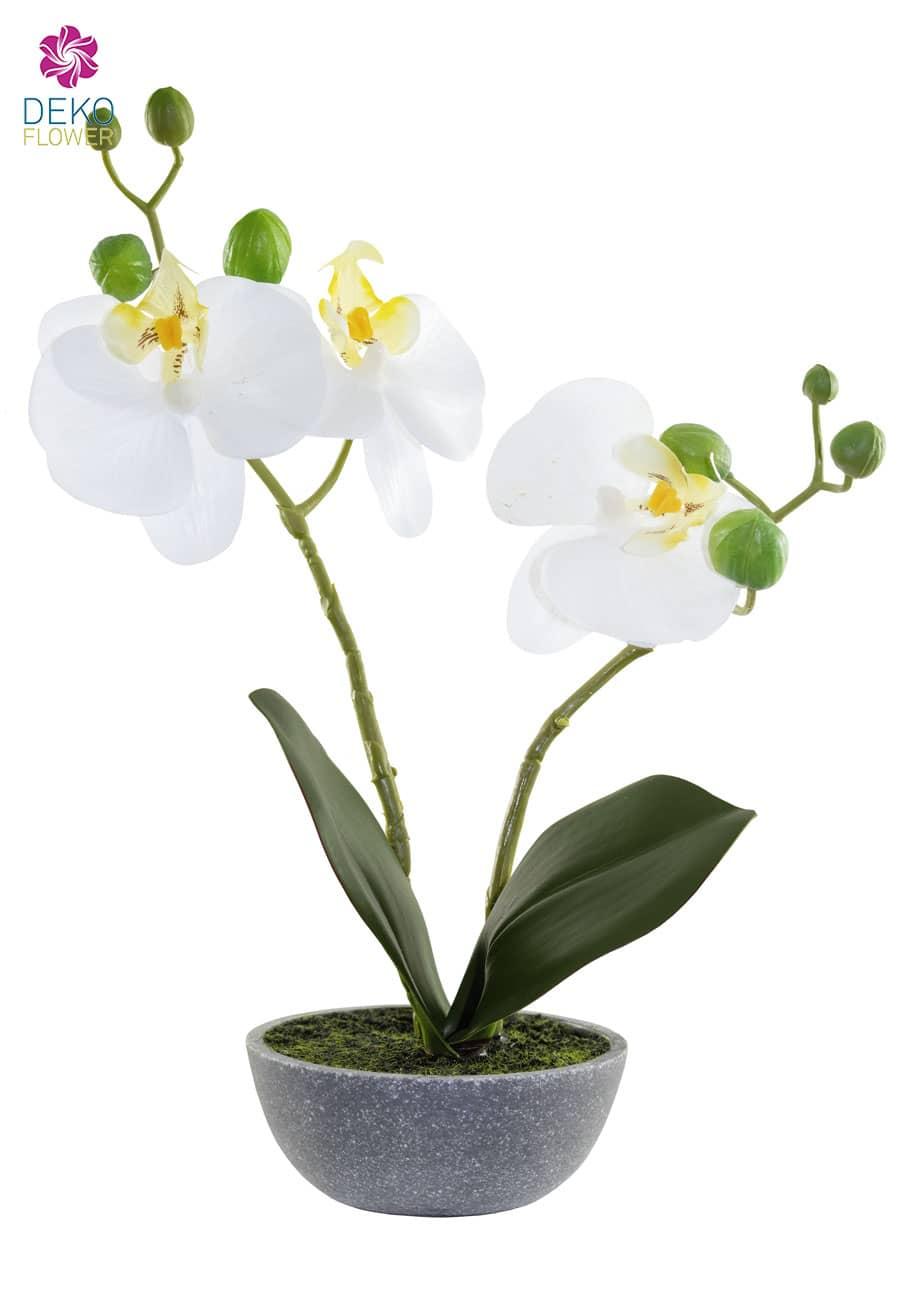 Kunstorchidee in Schale 25 cm weiß