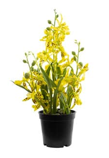 Kunstorchidee Oncidium gelb 35 cm
