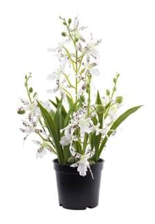 Kunstorchidee Oncidium weiß 35 cm