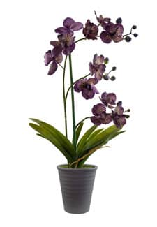 Kunstorchidee violett 57 cm getopft