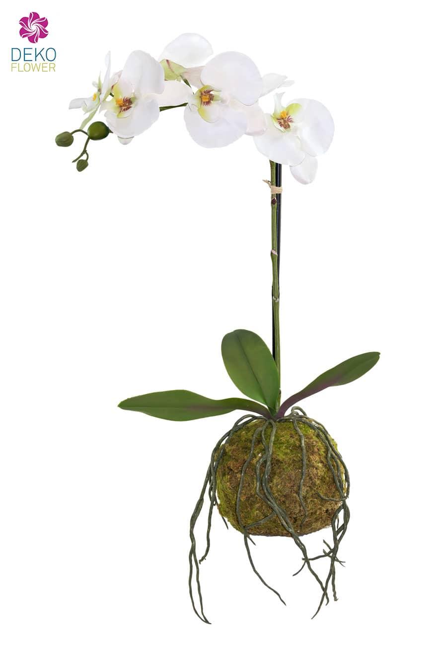 Kunstorchidee mit Moosball 55 cm weiß