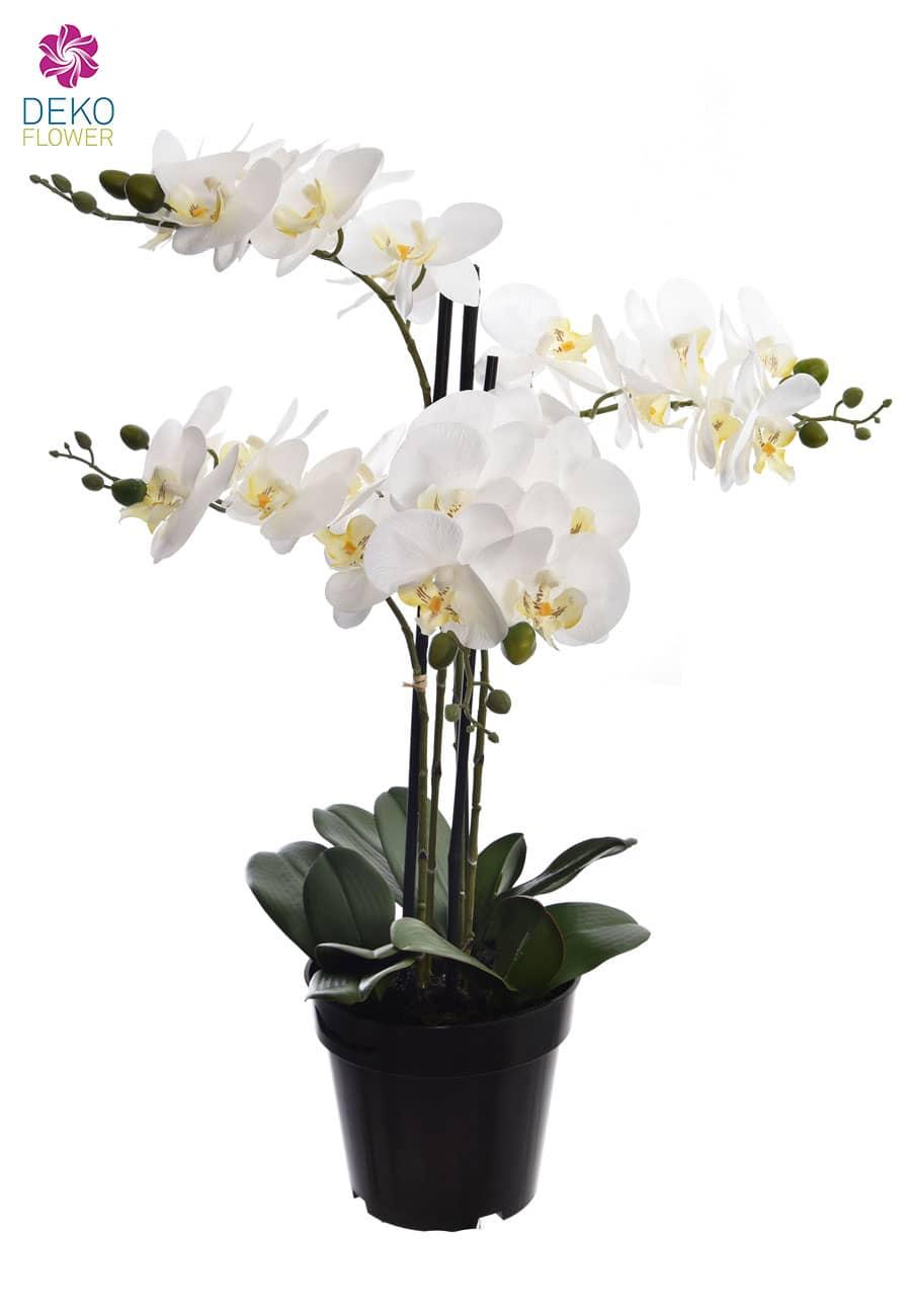 Orchidee weiß 68 cm getopft