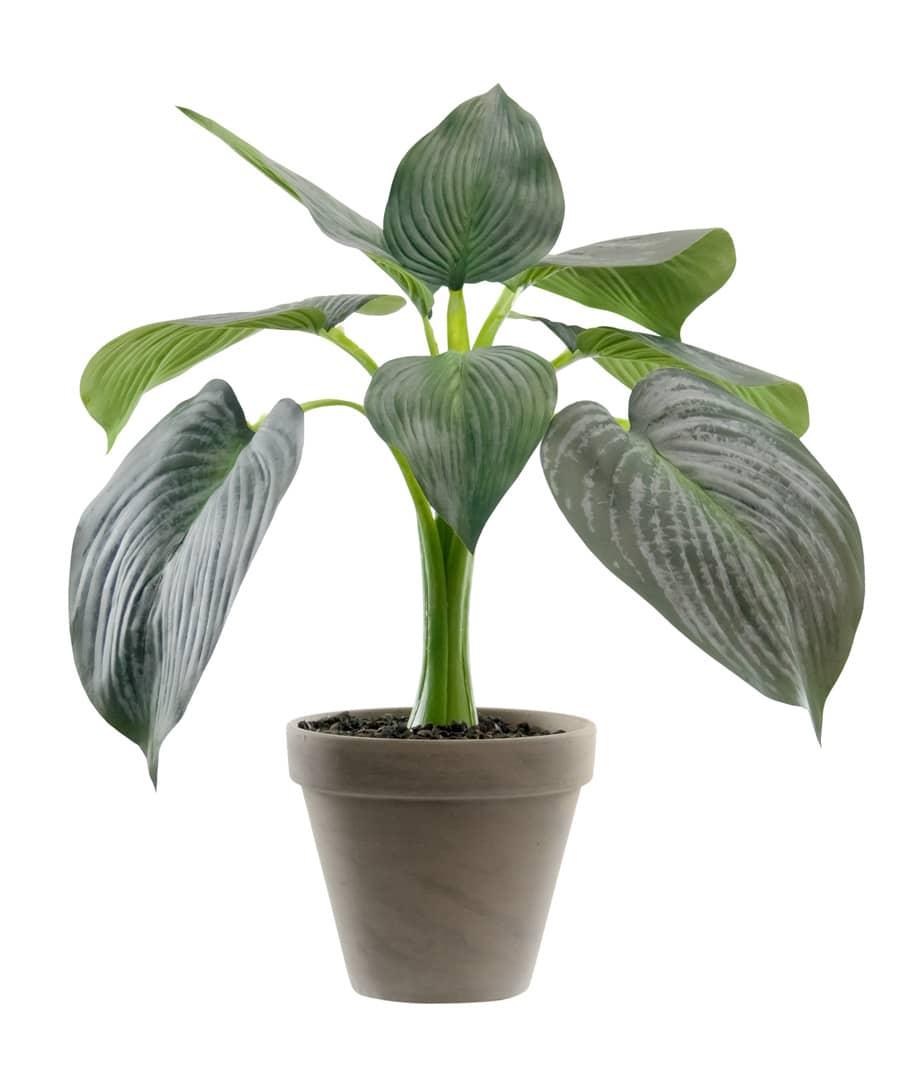 Kunstpflanze Hosta grün 32 cm im Tontopf