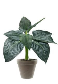 Kunstpflanze Hosta grün 41 cm im Tontopf