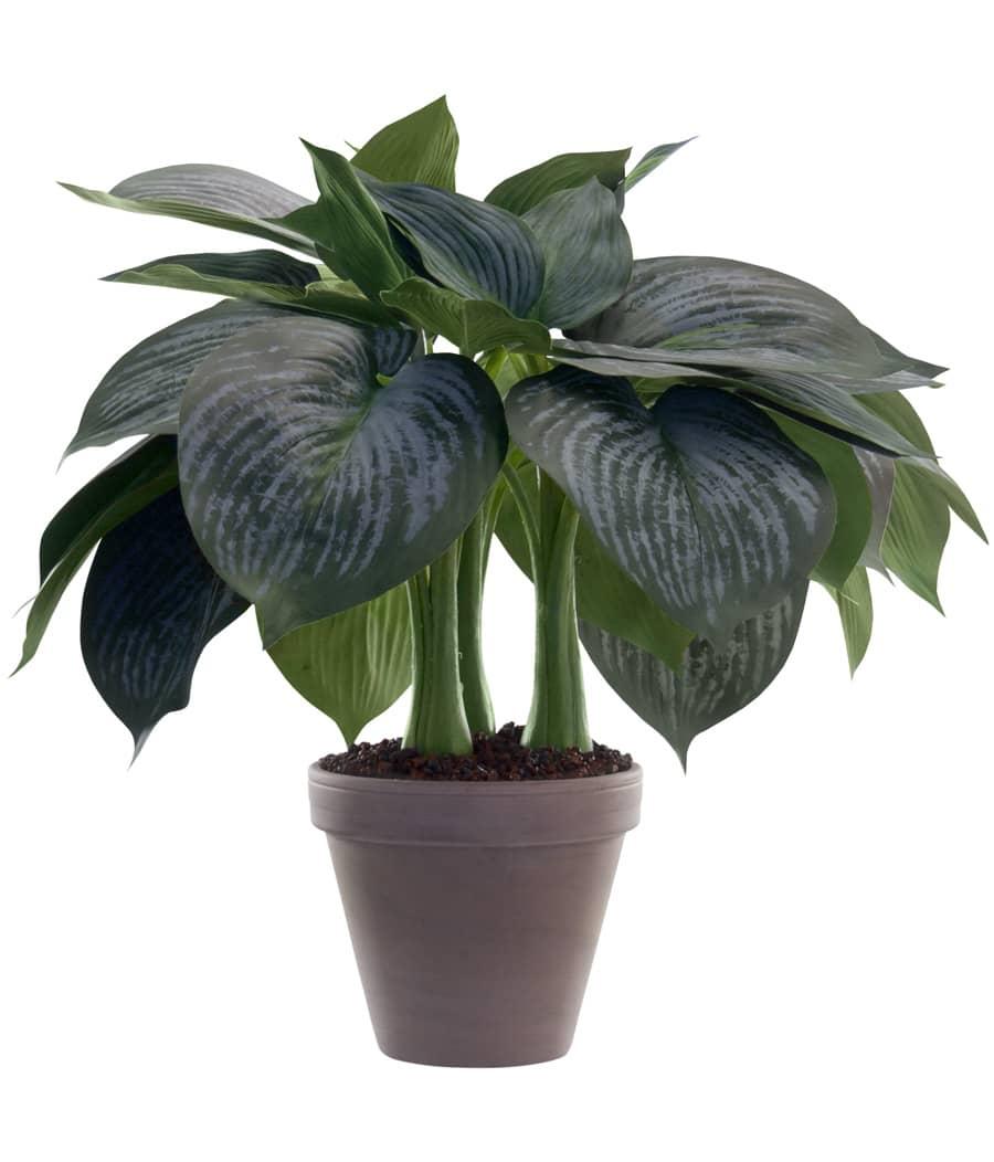 Kunstpflanze Hosta im Topf 44 cm grün