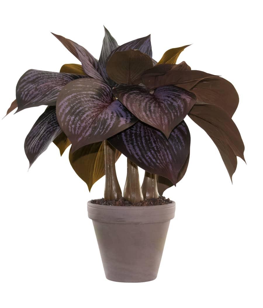 Kunstpflanze Hosta im Topf 44 cm weinrot