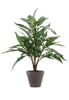 Kunstpflanze Silver King im Tontopf 60cm