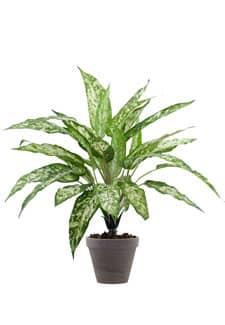 Kunstpflanze Aglaonema 47cm