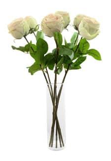 Kunstrosen halboffen 6er Pack grün/ rosa 55 cm