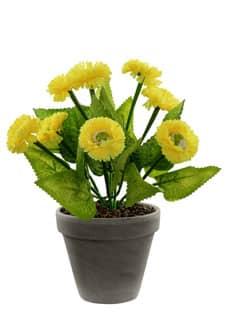 Margeriten Topfblumen gelb 28 cm