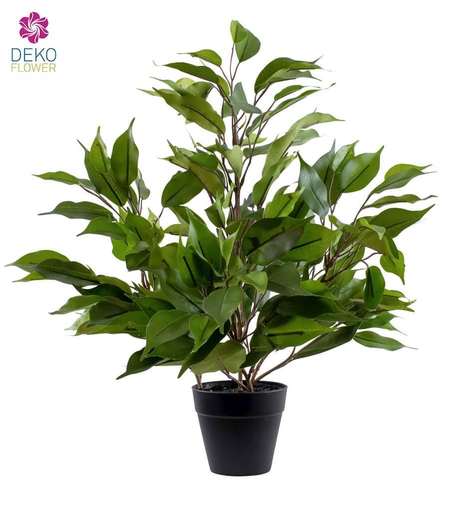 Mini Ficus Topfpflanze grün 42 cm