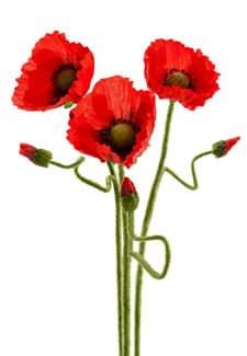 Mohn Kunstblumen rot 67 cm 3er-Pack