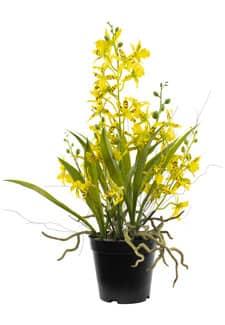Oncidium künstliche Orchidee 48 cm gelb