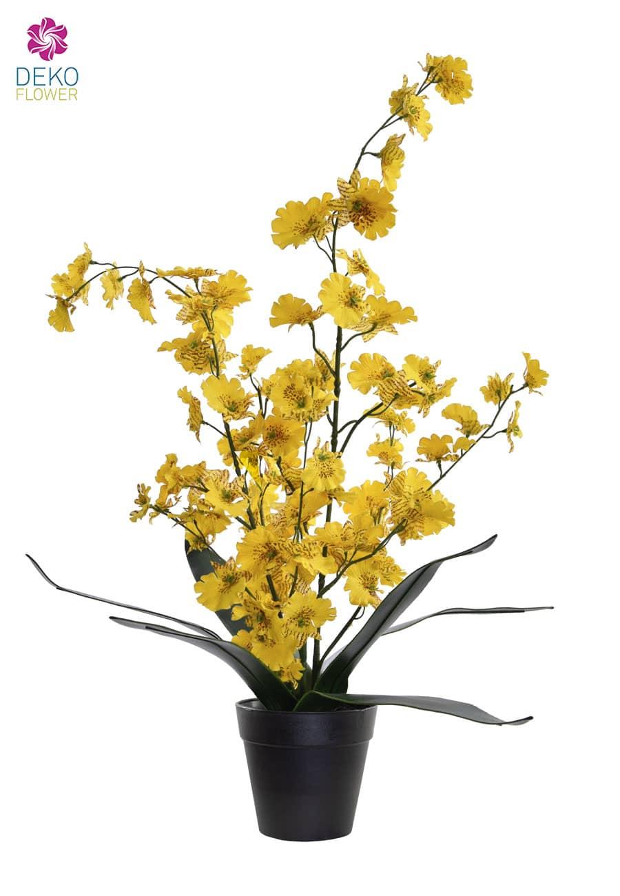Oncidium Orchidee gelb 53 cm
