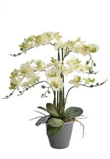 Orchidee getopft grün 69 cm
