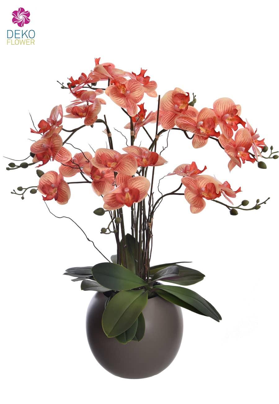 Orchidee Phalaenopsis korallenrot 70 cm getopft