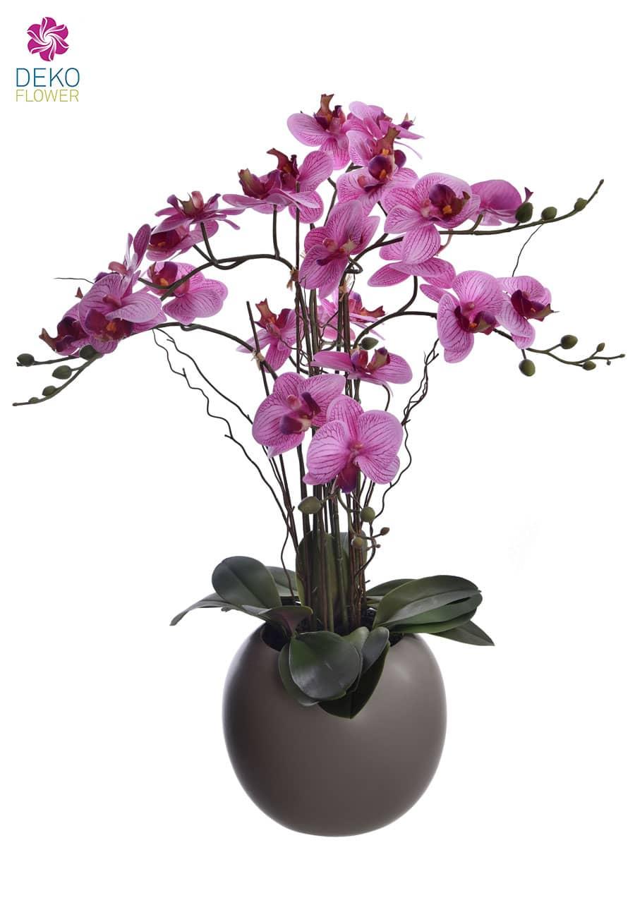 Orchidee Phalaenopsis getopft rosa lavendel 70 cm