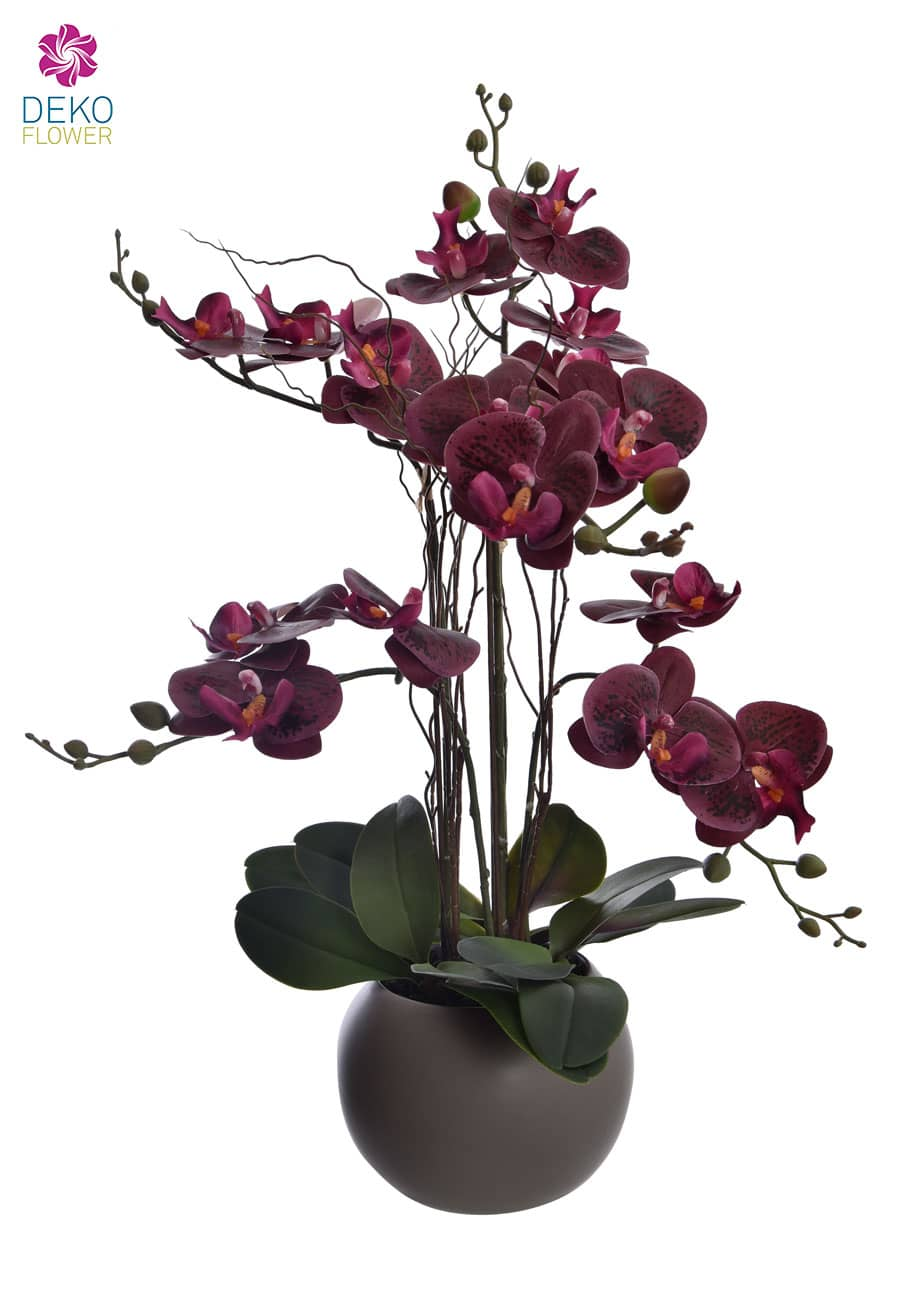 Orchidee Phalaenopsis weinrot 57 cm getopft