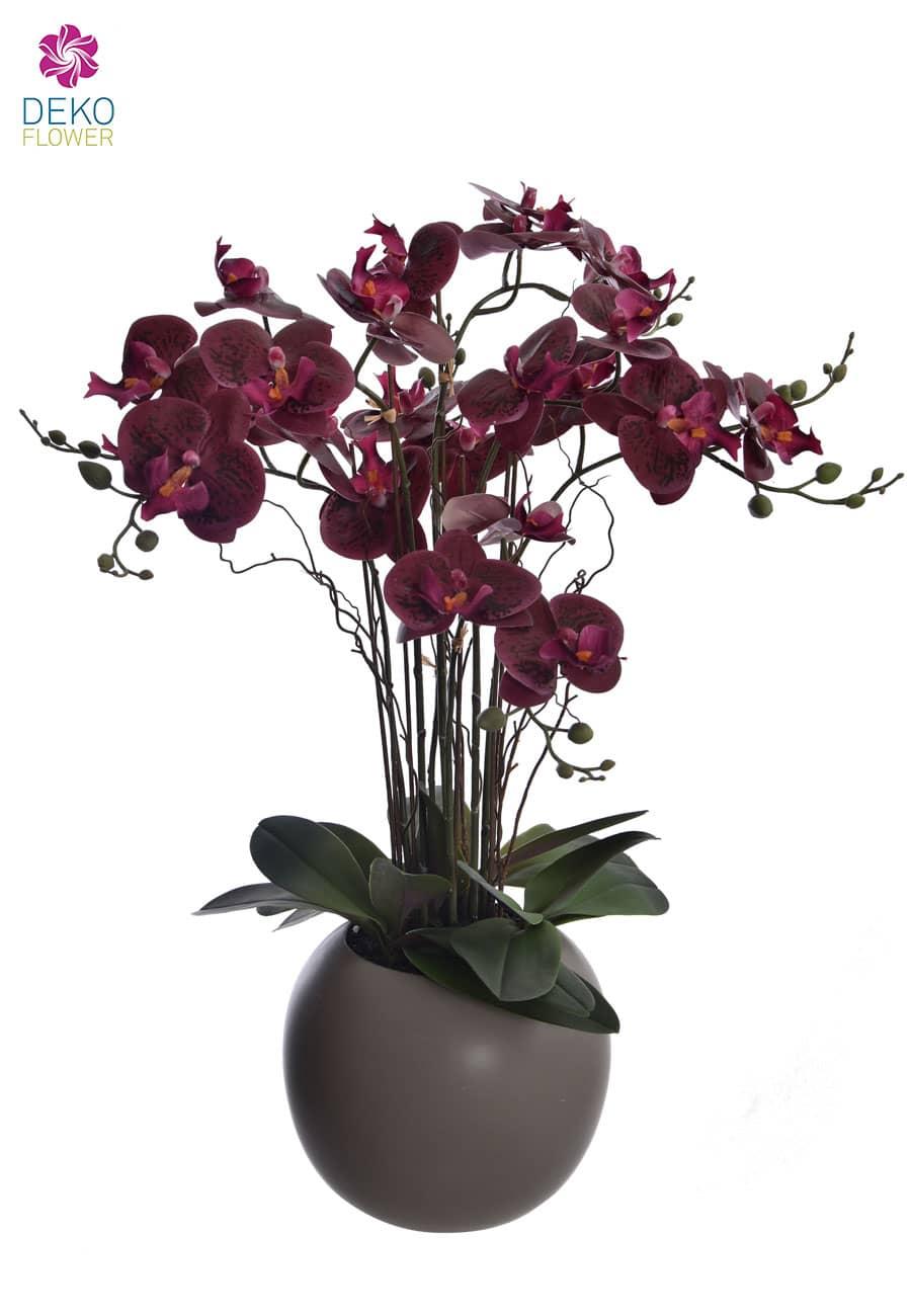 Orchidee Phalaenopsis weinrot im Topf 70 cm