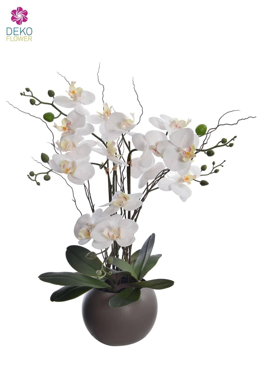 Orchidee Phalaenopsis weiß getopft 57 cm