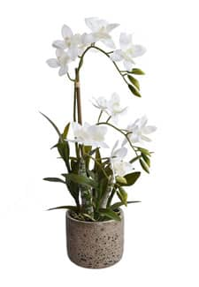 Orchidee »Real Touch« 53 cm weiß
