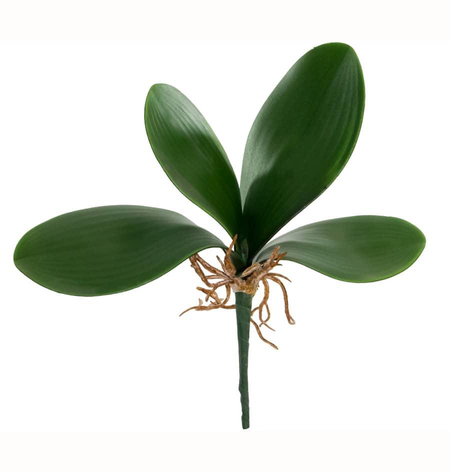 Orchideen Luftwurzel mit 4 Blättern 24 cm