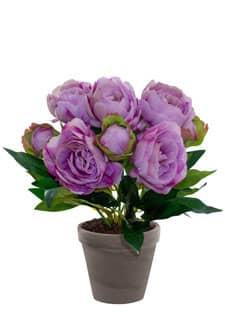 Pfingstrosen Topfpflanze lila 42 cm
