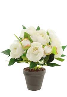 Pfingstrosen Topfpflanze weiß 42 cm