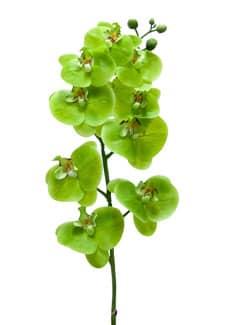 Künstlicher Phalaenopsis Orchideenzweig gelbgrün 100 cm