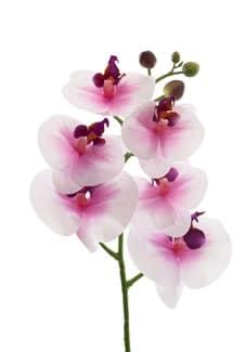 Künstlicher Phalaenopsis Orchideenzweig weiß pink 60 cm