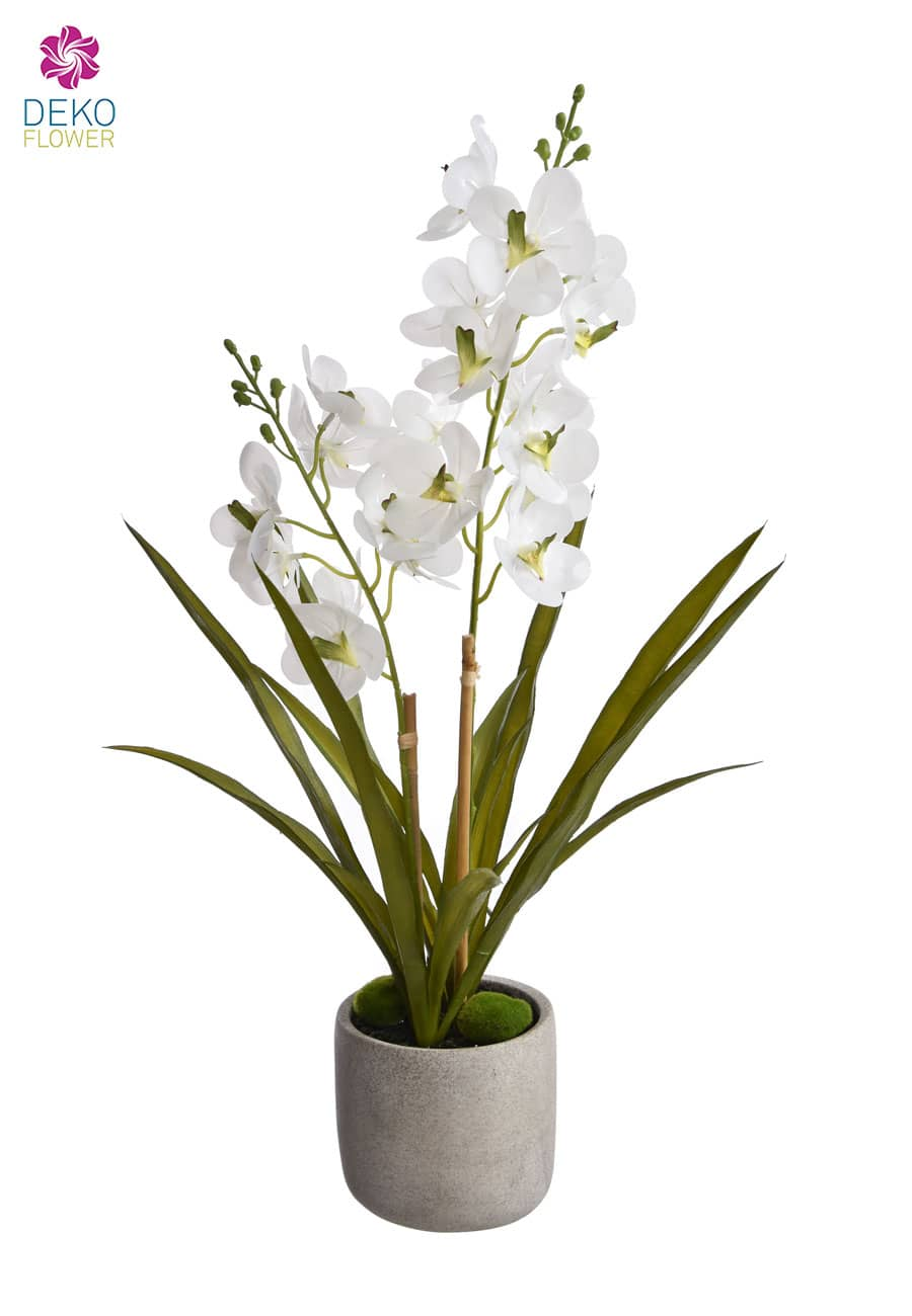 »Real Touch« Ascocenda Orchidee 60 cm weiß